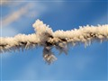 barbed wire in the Winter