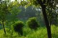 TREES_20110927-5088