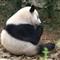 PandaResearchCenter-17(arc)