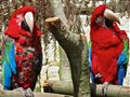 Isle of Wight Parrots