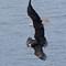 eagle-1: OLYMPUS DIGITAL CAMERA