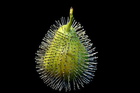Pearcupine...