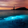 Bioluminescent Plankton and sunset go along well.