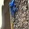 Tree Agama