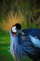 The_Bird