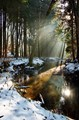 Forest Light - Sun beams for the deers
