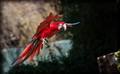 Da Parrot