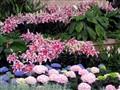 Lillies and Hydrangea