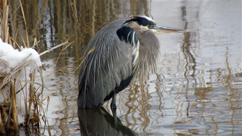 2013-01-15 GSL Wetlands 009
