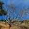 Angel Island tree