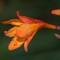 Garden macros 20130903 0009
