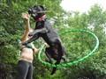 A Girl, A Dog, A Stick & A Hoop