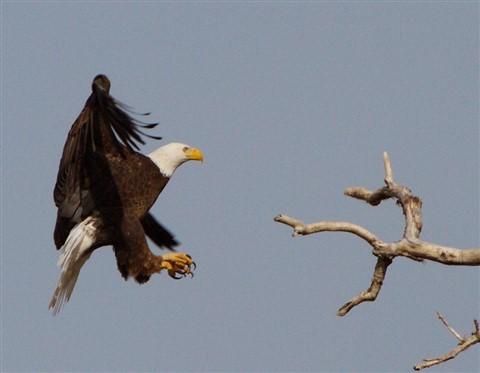 Eagle 1 03.06.2013