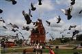 Pigeons. Vladimir. Russia