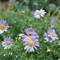 Flowers in the back garden
