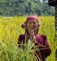 A proud Nepali Woman in her Rice field