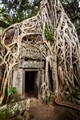 Root Covered Doorway at Ta Prohm