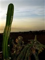 Balcony cactus