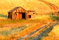Sunrise casts warm light on weathered wood and farm land near Devil's Tower National Monument, Wyoming.