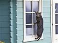 Cat Burglar !!