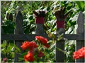 arboretum gloves