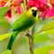 20140206-Blue-winged-Leafbird-cntlaw-dpreview01