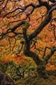 Portrait of a Lace Leaf