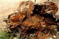 A rotten Pine