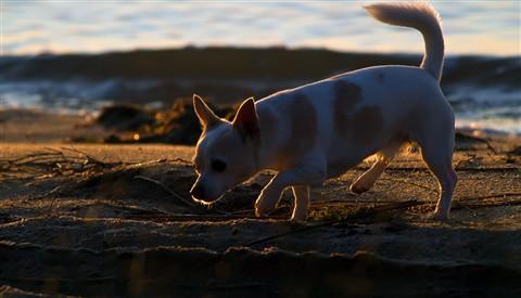 Doris the Wonder Dog_web