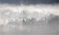misty dake