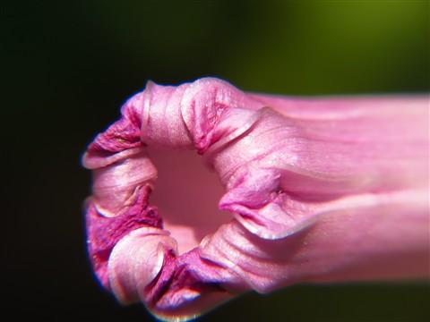 openning flower1600