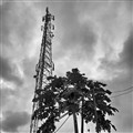 Cell tower and papaya tree