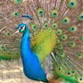 Birds - 7