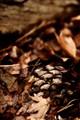 Hidden pine cone