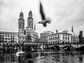 Grossmünster in Zürich with seagulls flying in the foreground