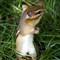 SquirrelStanding_1280_IMG_1598