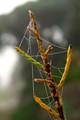 Dew-Laden Web