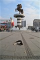 pariah dog on the main square in Skopje, Macedonia
