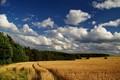 corn landscape