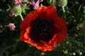 IMG_floweringweed