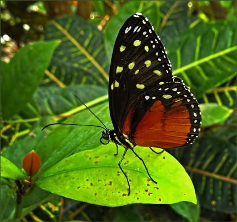 Butterfly5N