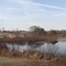 Beaver Dam III