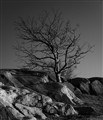 20111228_6236 6x7 GS tree