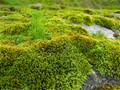 Moss Covers These Basalt Rocks