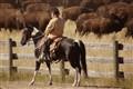 Buffalo Pony