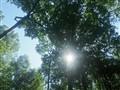 Matang Forest