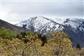 Mt Ogden