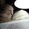 cat-reading1