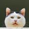 P5251241_DxO: OLYMPUS DIGITAL CAMERA