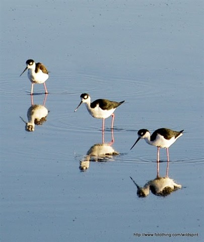 3 bird reflection small